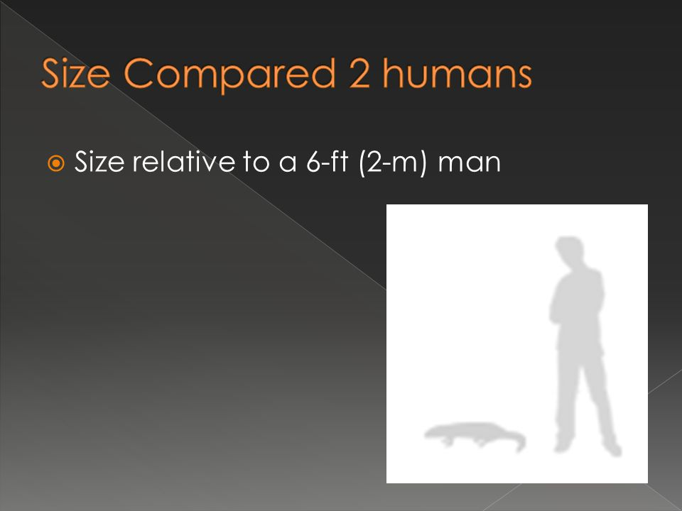  Size relative to a 6-ft (2-m) man