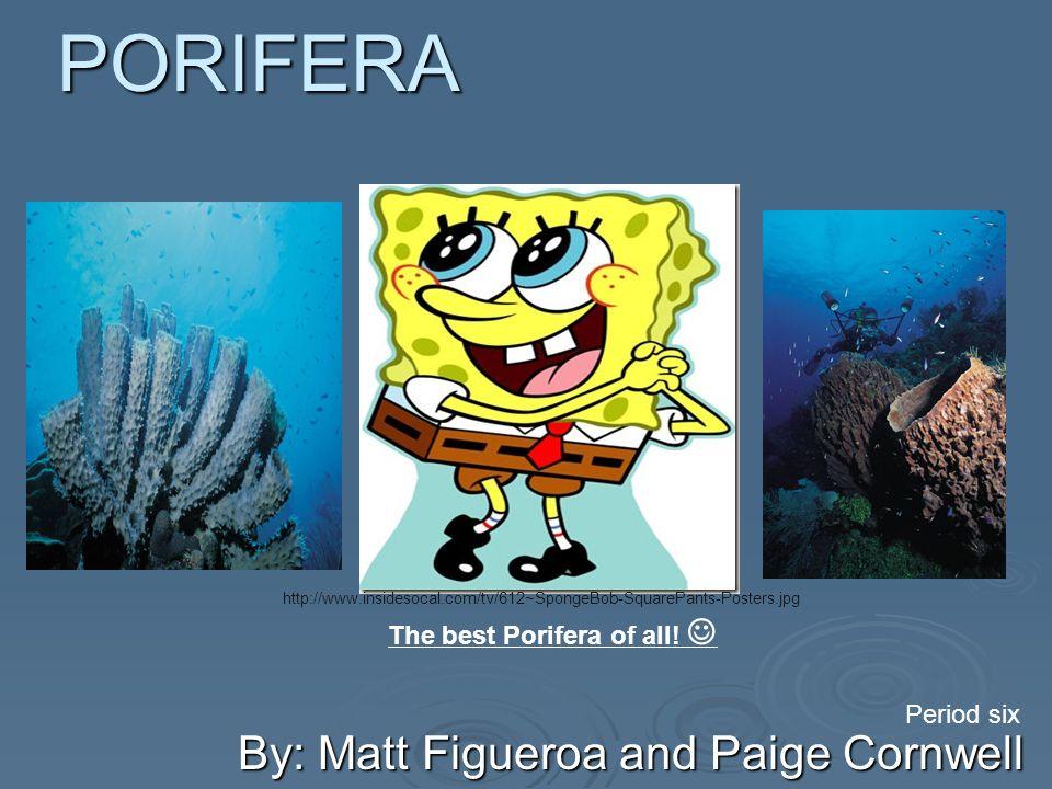 PORIFERA By: Matt Figueroa and Paige Cornwell Period six The best Porifera of all.