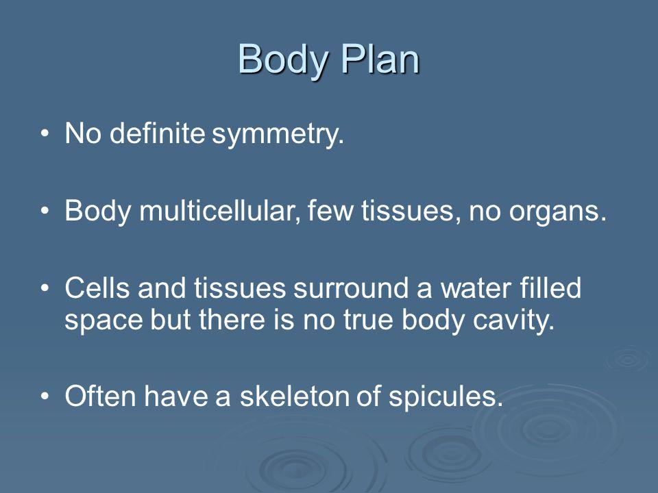 Body Plan No definite symmetry.Body multicellular, few tissues, no organs.