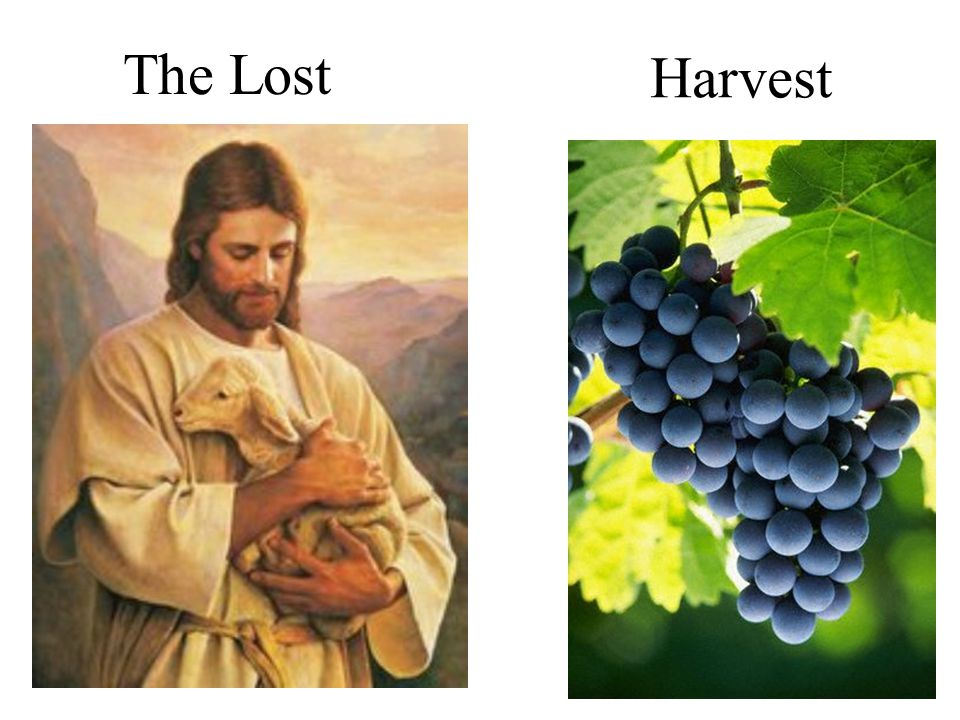 The Lost Harvest