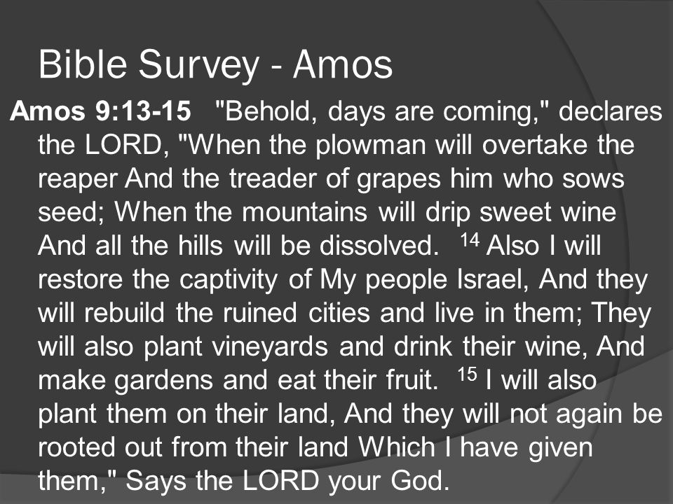 Bible Survey - Amos Amos 9:13-15 Behold, days are coming, declares the LORD, When the plowman will overtake the reaper And the treader of grapes him who sows seed; When the mountains will drip sweet wine And all the hills will be dissolved.