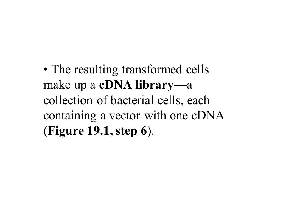 The resulting transformed cells make up a cDNA library—a collection of bacterial cells, each containing a vector with one cDNA (Figure 19.1, step 6).