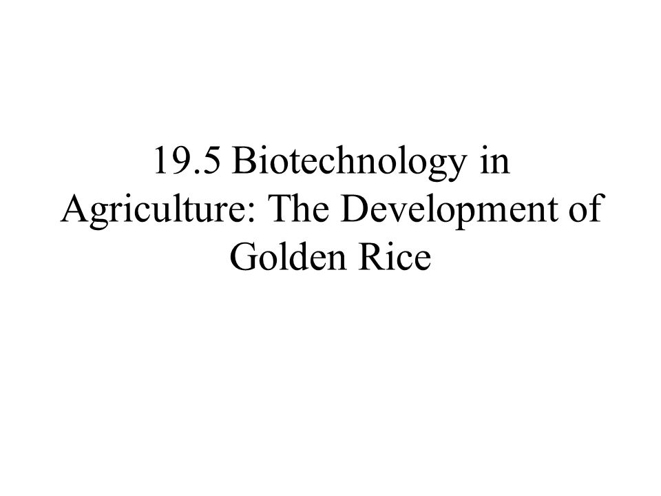 19.5 Biotechnology in Agriculture: The Development of Golden Rice