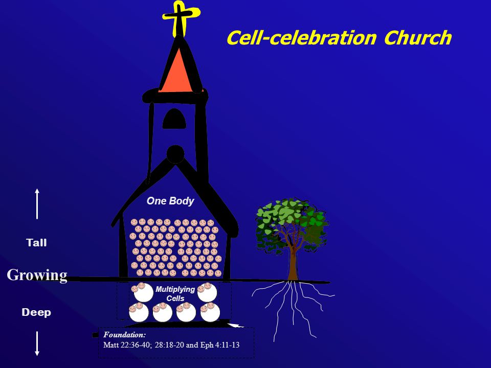 Multiplying Cells Cell-celebration Church One Body Tall Deep Growing Foundation: Matt 22:36-40; 28:18-20 and Eph 4:11-13