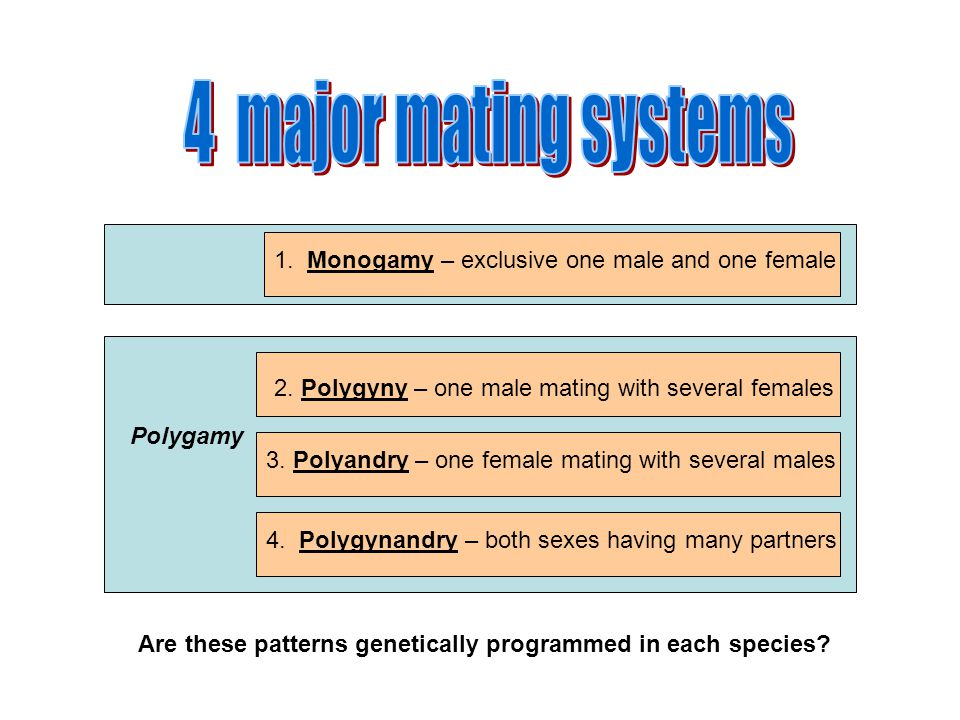 Polygamy 1. Monogamy – exclusive one male and one female 2. Polygyny – one male mating with several females 3. Polyandry – one female mating with seve
