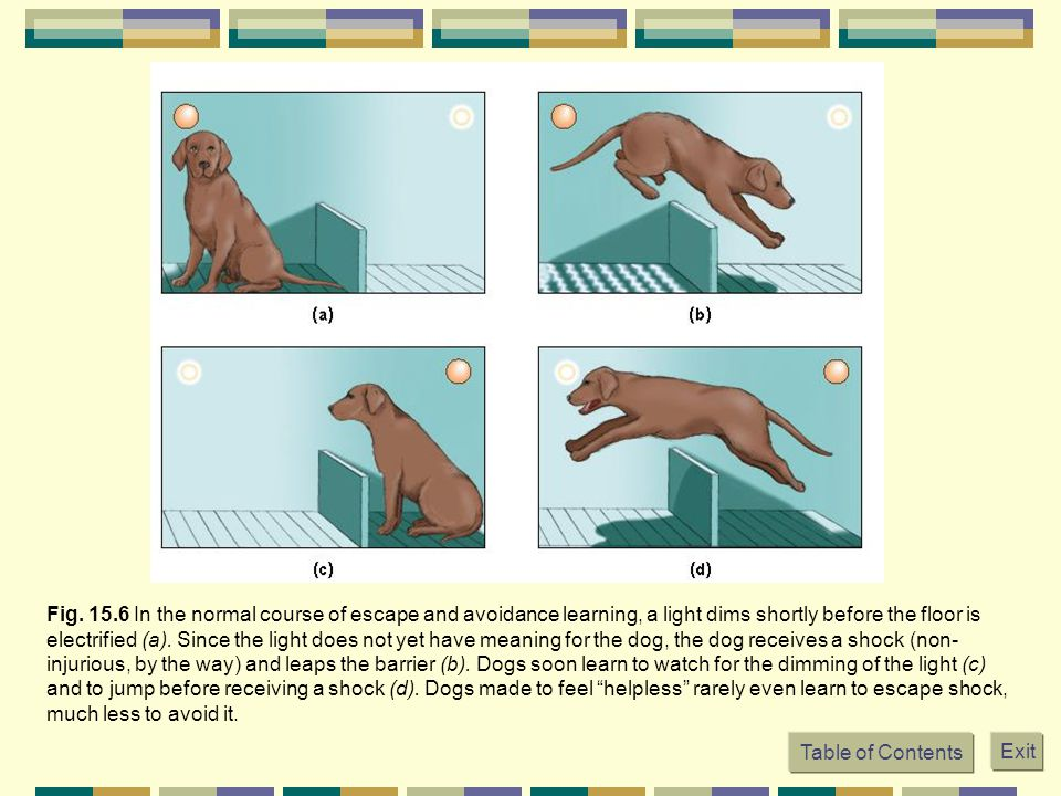 Table of Contents Exit Fig. 15.6 In the normal course of escape and avoidance learning, a light dims shortly before the floor is electrified (a). Sinc