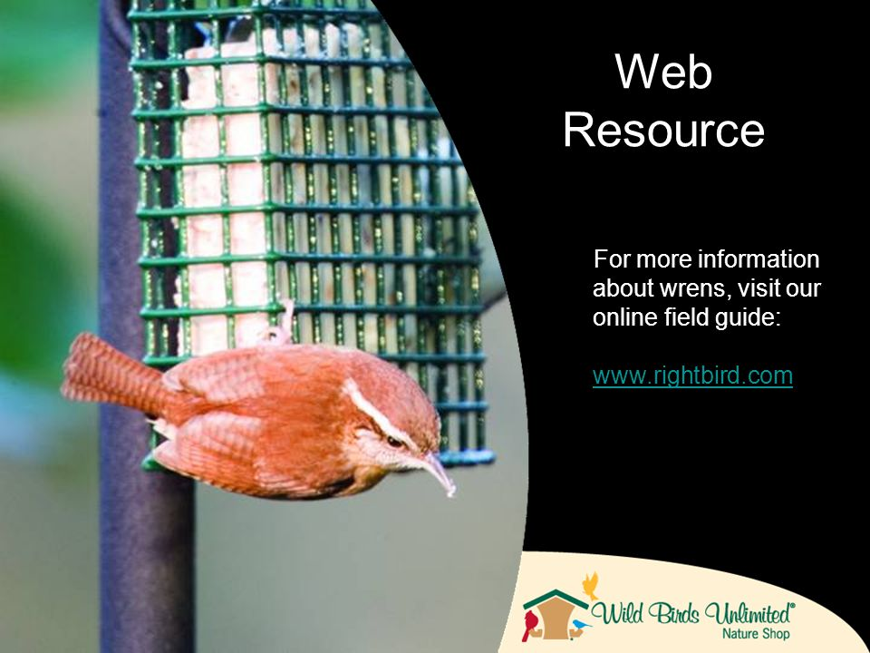 For more information about wrens, visit our online field guide: www.rightbird.com Web Resource