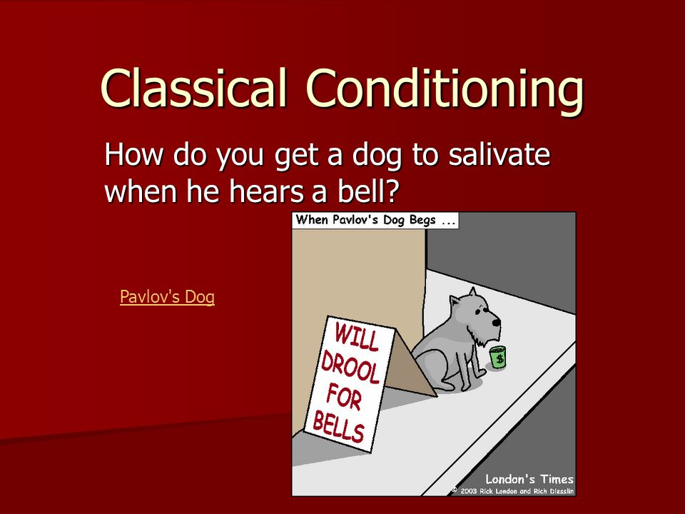 Classical Conditioning How do you get a dog to salivate when he hears a bell? Pavlov s Dog