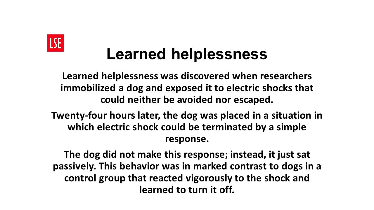 Learned helplessness Learned helplessness was discovered when researchers immobilized a dog and exposed it to electric shocks that could neither be av