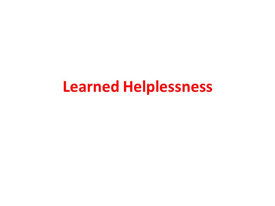 Learned helplessness Marty Seligman Four groups of dogs Training I and II result Lasting effects Grp IEscapable/escapeable runNone Grp IIInescapable/inescapable not runNone Grp IIIEscapable/inescapable not runNone Grp IVInescapable/escapable not run Severe Remember, Seligman's hypothesis was that NONE of the dogs would be significantly harmed.