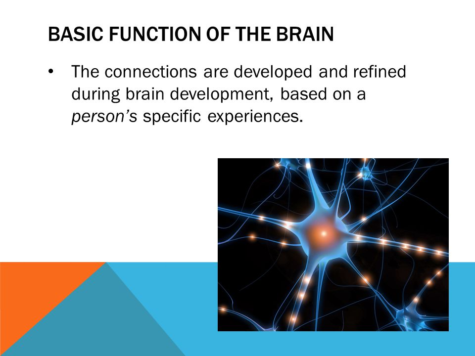 BASIC FUNCTION OF THE BRAIN The connections are developed and refined during brain development, based on a person's specific experiences.
