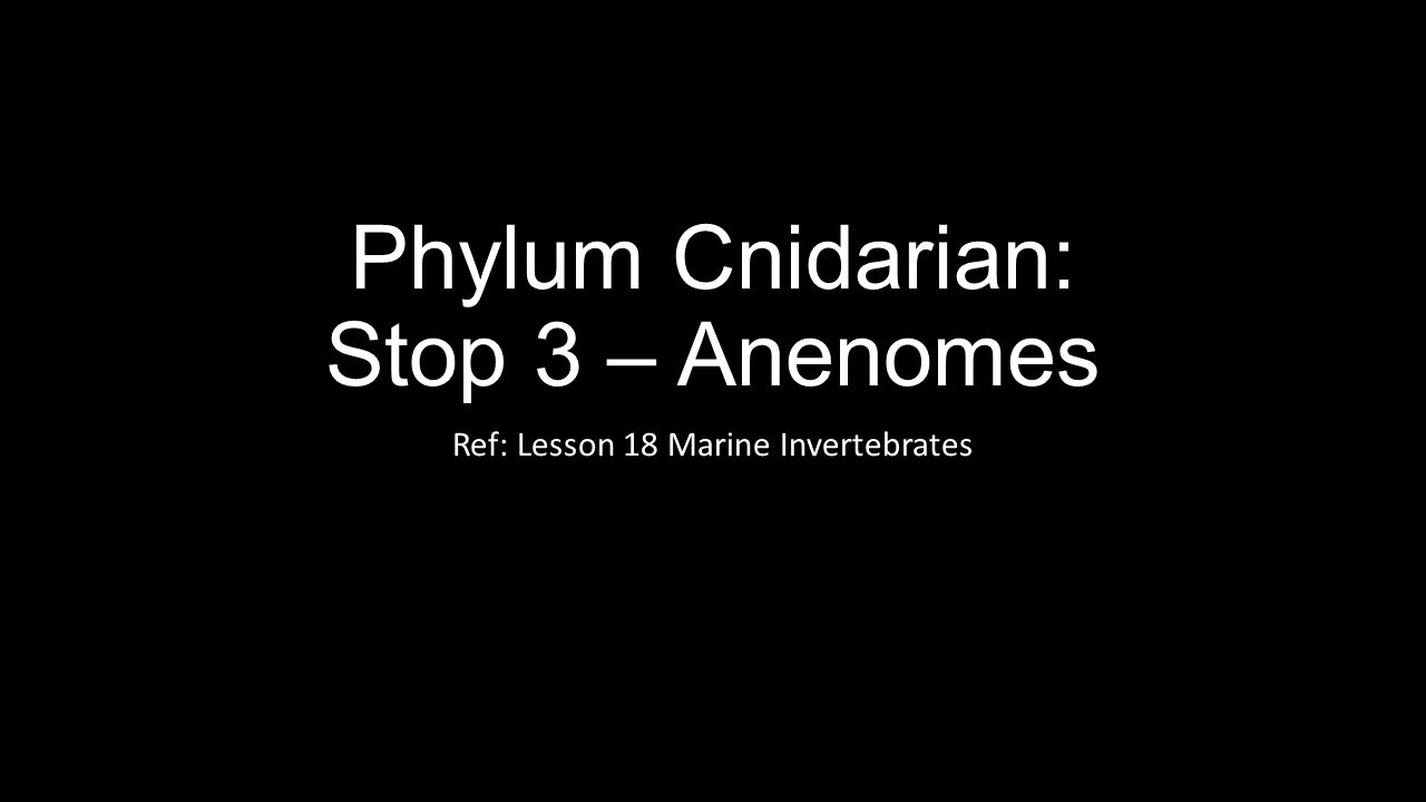 Phylum Cnidarian: Stop 3 – Anenomes Ref: Lesson 18 Marine Invertebrates