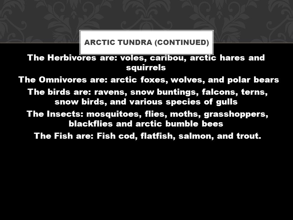 Arctic tundra is located in the northern hemisphere, encircling the north pole and extending south to the coniferous forests of the taiga.