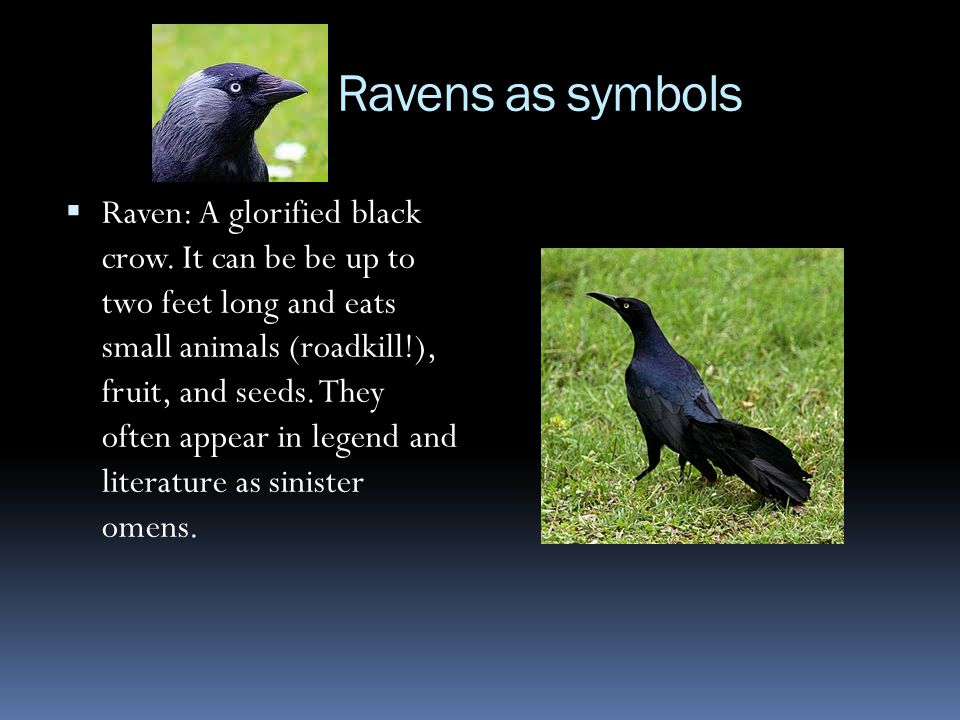 Criticisms of The Raven  Some reviewers in Poe's day, including poet Walt Whitman, criticized The Raven for its sing-song, highly emotional quality.