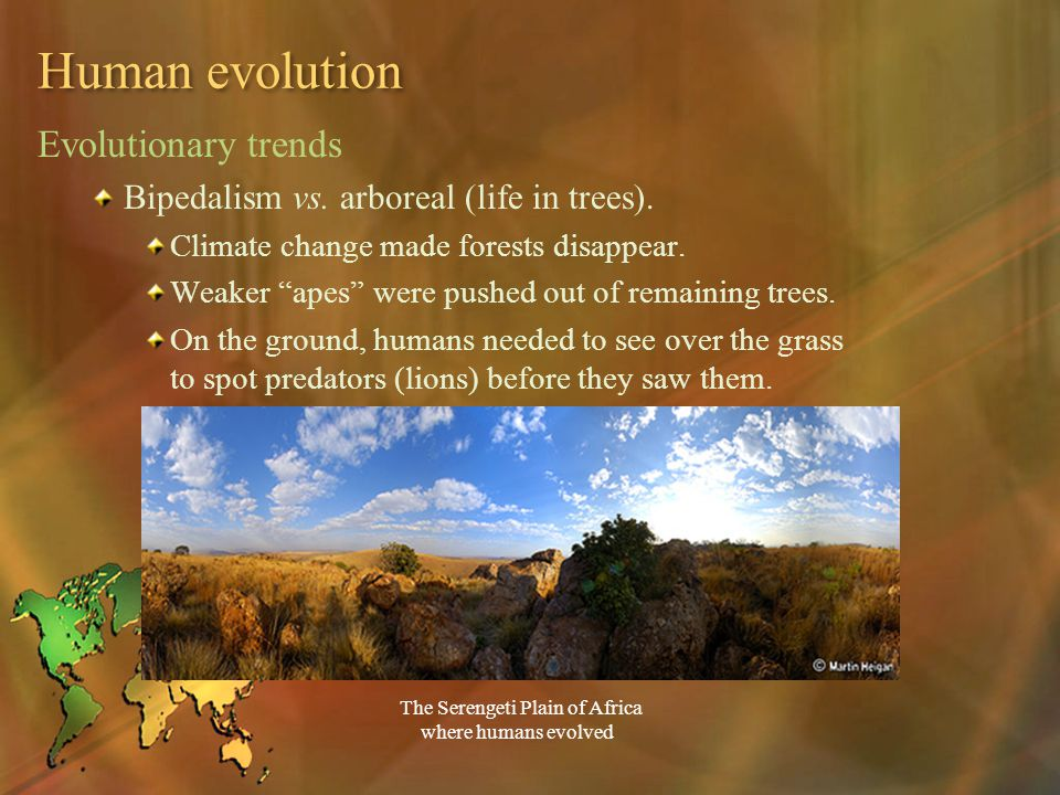 "Human evolution Evolutionary trends Bipedalism vs. arboreal (life in trees). Climate change made forests disappear. Weaker ""apes"" were pushed out of r"