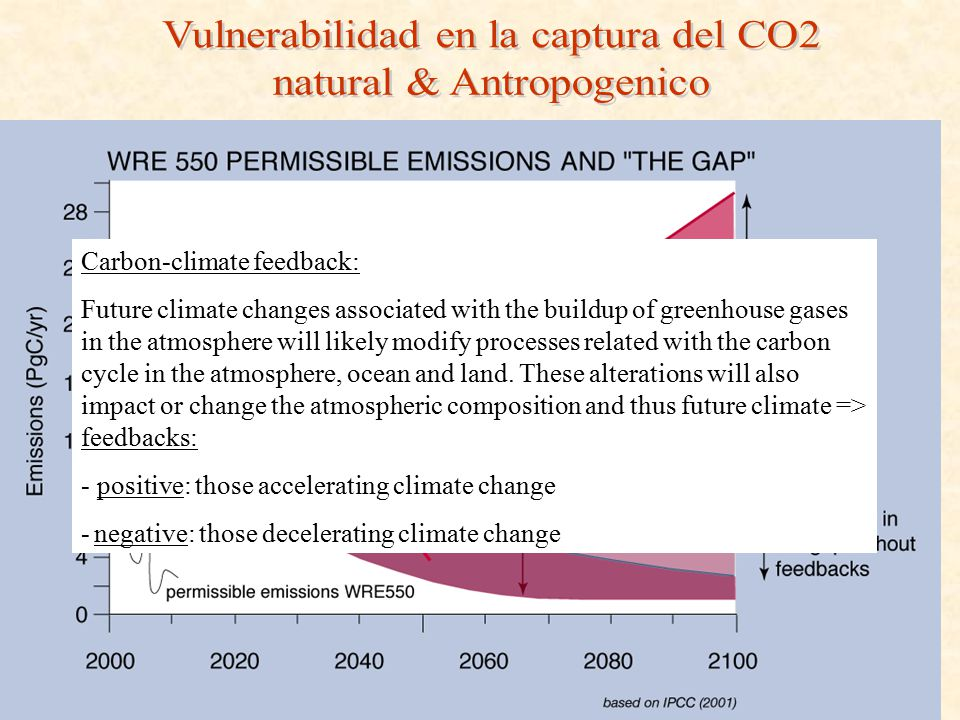 Carbon-climate feedback: Future climate changes associated with the buildup of greenhouse gases in the atmosphere will likely modify processes related
