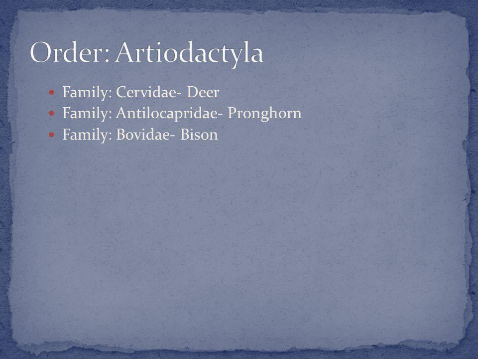 Family: Cervidae- Deer Family: Antilocapridae- Pronghorn Family: Bovidae- Bison