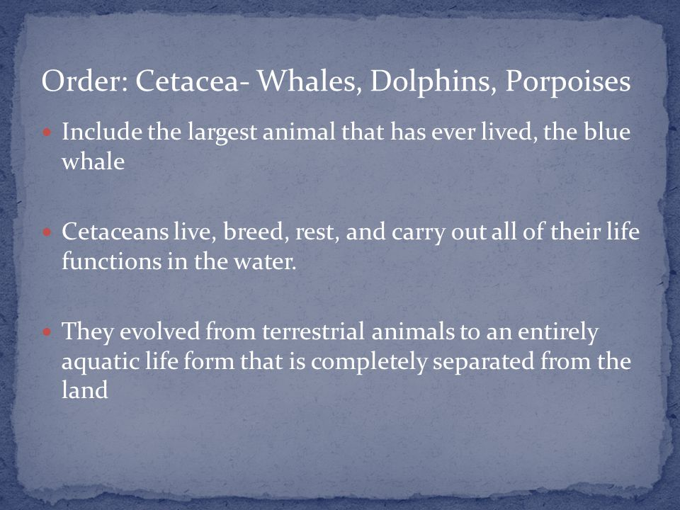 Include the largest animal that has ever lived, the blue whale Cetaceans live, breed, rest, and carry out all of their life functions in the water.