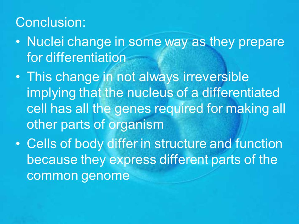 Conclusion: Nuclei change in some way as they prepare for differentiation This change in not always irreversible implying that the nucleus of a differ
