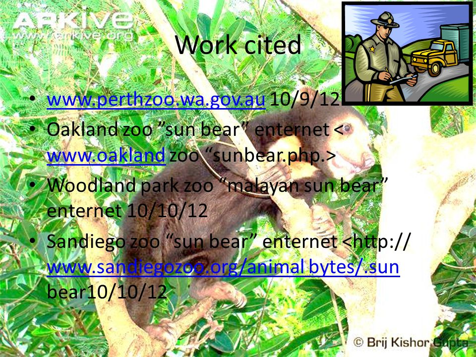 Work cited www.perthzoo.wa.gov.au 10/9/12 www.perthzoo.wa.gov.au Oakland zoo sun bear enternet www.oakland Woodland park zoo malayan sun bear enternet 10/10/12 Sandiego zoo sun bear enternet <http:// www.sandiegozoo.org/animal bytes/.sun bear10/10/12 www.sandiegozoo.org/animal bytes/.sun
