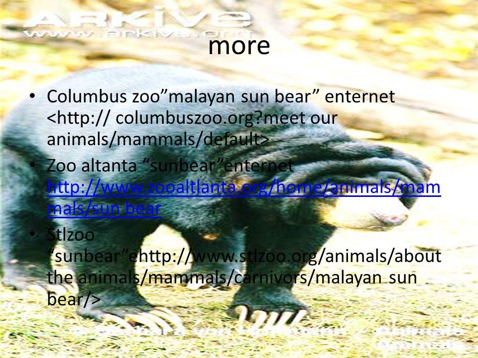 "more Columbus zoo""malayan sun bear"" enternet Zoo altanta ""sunbear""enternet http://www.zooaltlanta.org/home/animals/mam mals/sun bear http://www.zooalt"