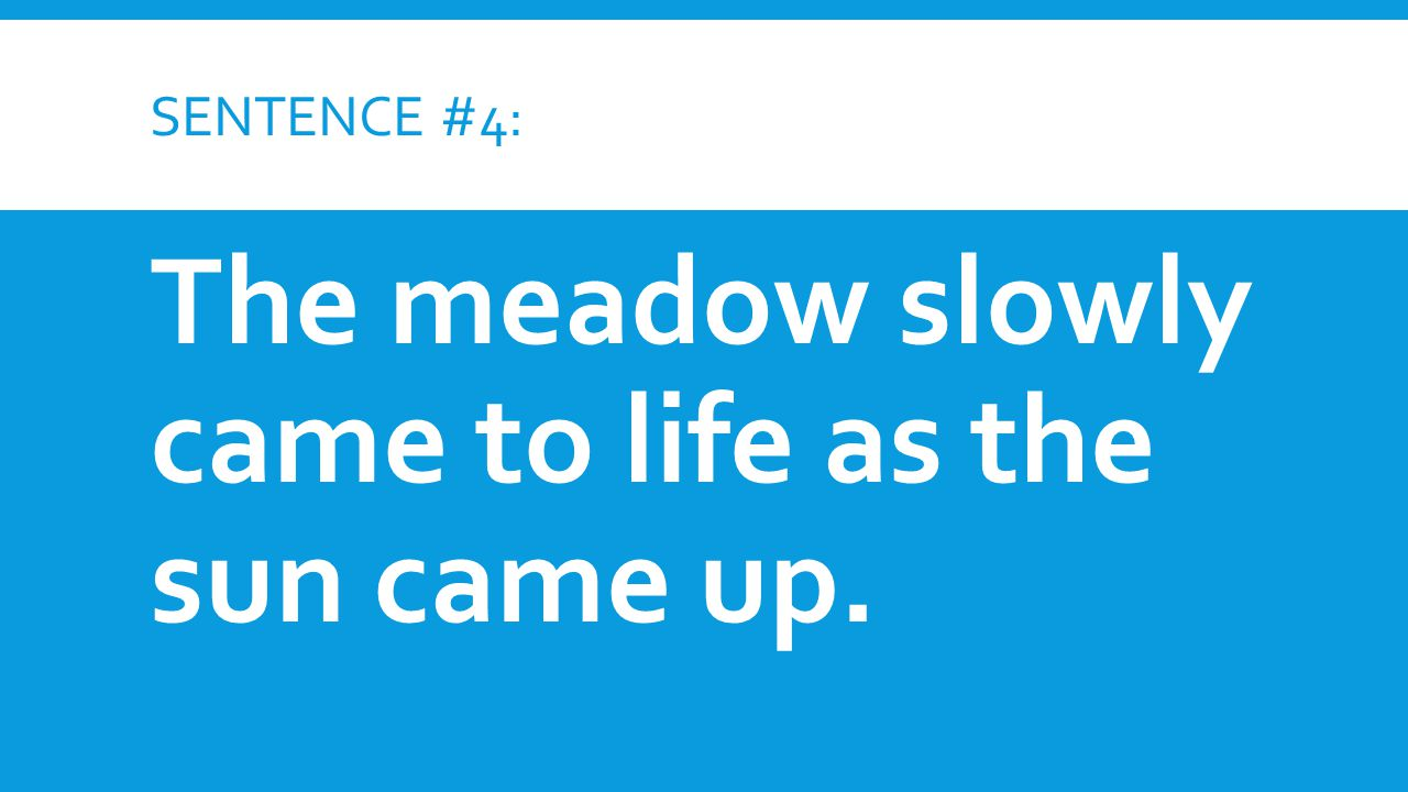 SENTENCE #4: The meadow slowly came to life as the sun came up.