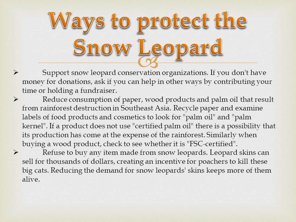 Human conflict is a key factor affecting the survival of the snow leopard.
