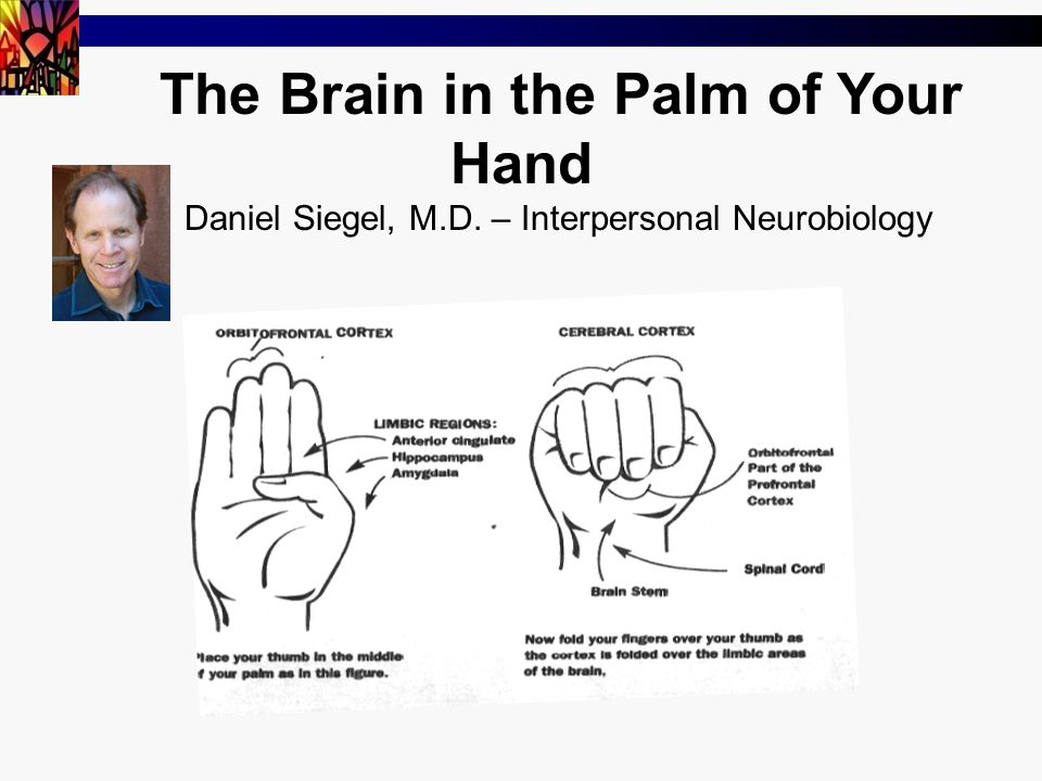 The Brain in the Palm of Your Hand Daniel Siegel, M.D. – Interpersonal Neurobiology