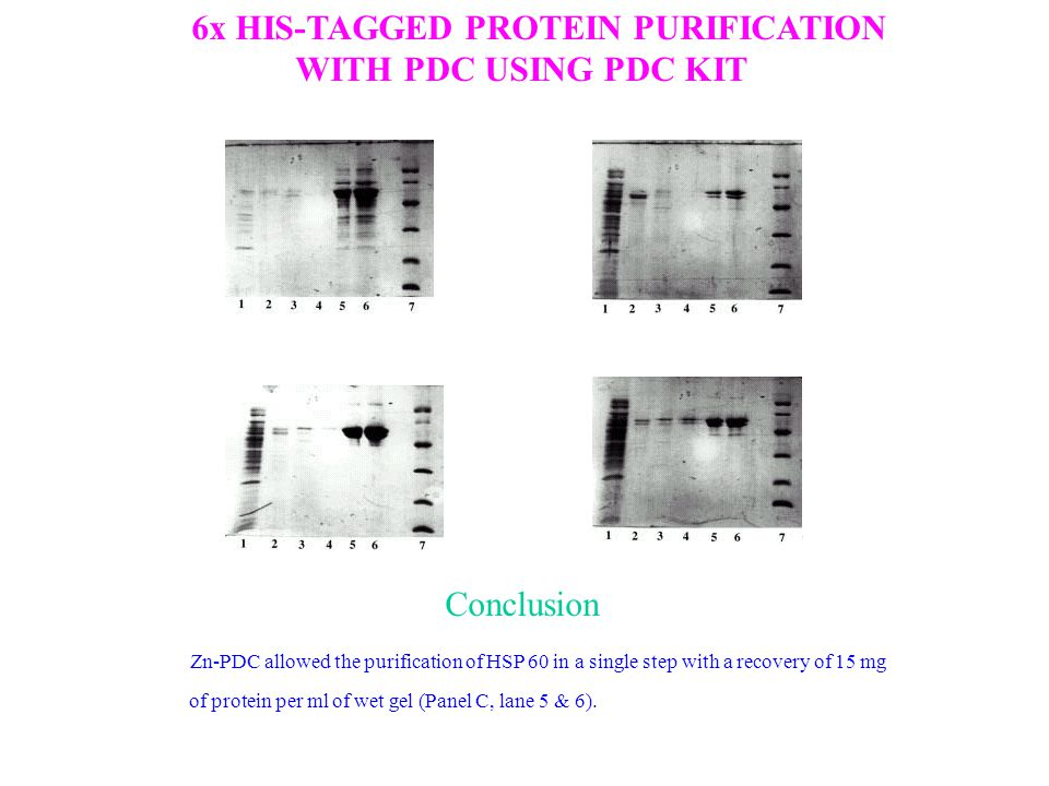 6x HIS-TAGGED PROTEIN PURIFICATION WITH PDC USING PDC KIT Zn-PDC allowed the purification of HSP 60 in a single step with a recovery of 15 mg of protein per ml of wet gel (Panel C, lane 5 & 6).