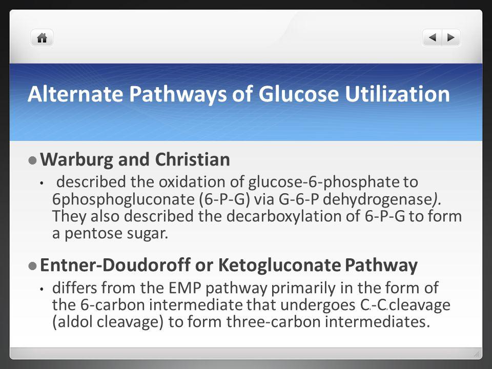 Alternate Pathways of Glucose Utilization Warburg and Christian described the oxidation of glucose-6-phosphate to 6phosphogluconate (6-P-G) via G-6-P