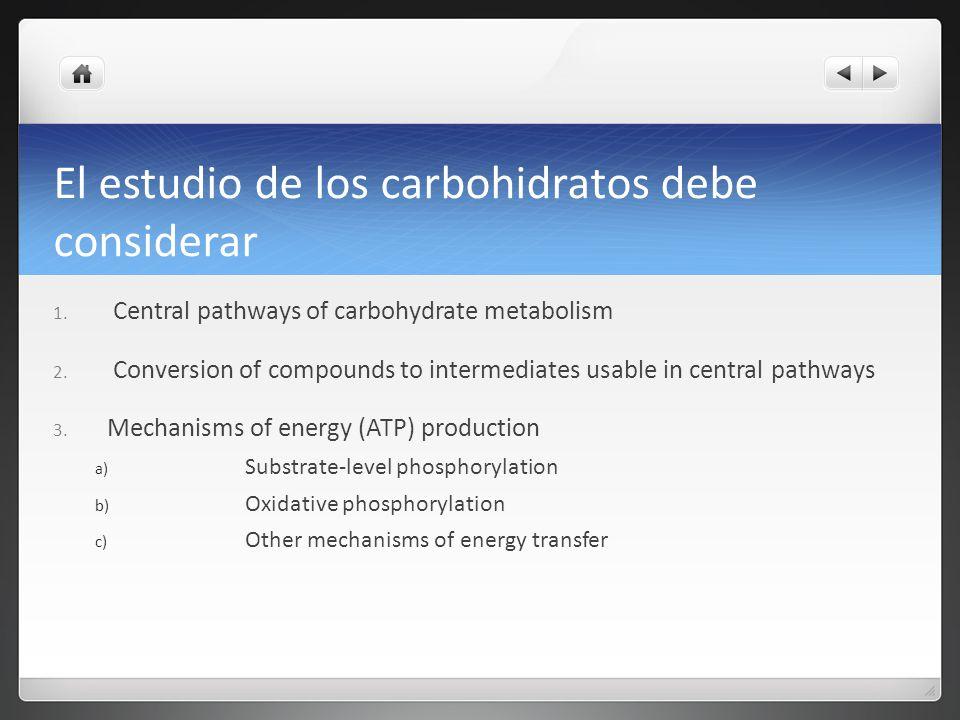 El estudio de los carbohidratos debe considerar 1. Central pathways of carbohydrate metabolism 2. Conversion of compounds to intermediates usable in c