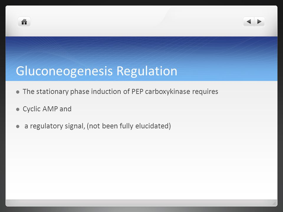 Gluconeogenesis Regulation The stationary phase induction of PEP carboxykinase requires Cyclic AMP and a regulatory signal, (not been fully elucidated