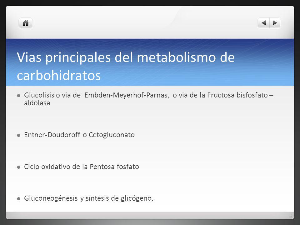 Vias principales del metabolismo de carbohidratos Glucolisis o via de Embden-Meyerhof-Parnas, o via de la Fructosa bisfosfato – aldolasa Entner-Doudor