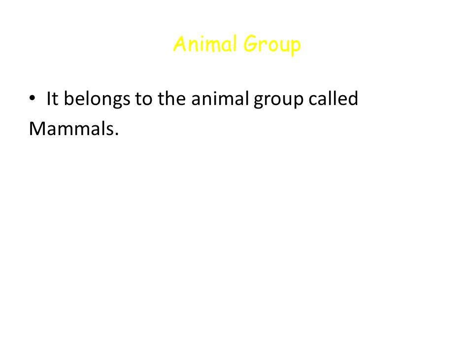 Animal Group It belongs to the animal group called Mammals.