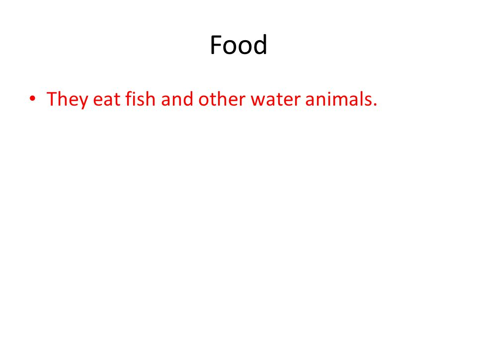 Food They eat fish and other water animals.