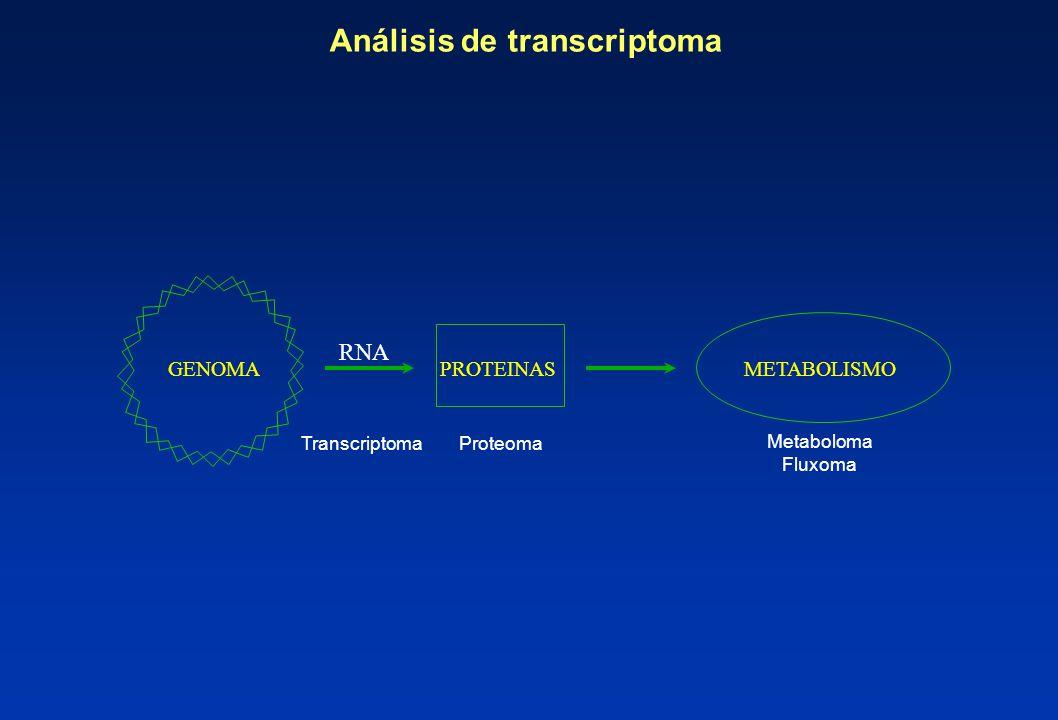 Análisis de transcriptoma GENOMA PROTEINASMETABOLISMO Transcriptoma Proteoma Metaboloma Fluxoma RNA