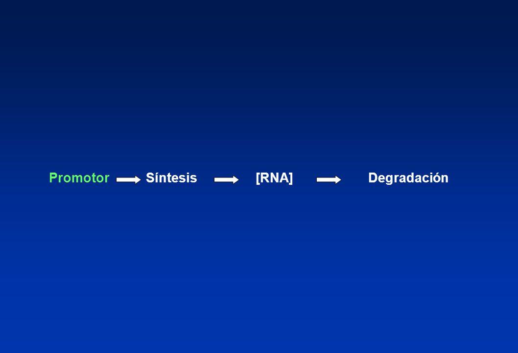 [RNA]SíntesisPromotorDegradación