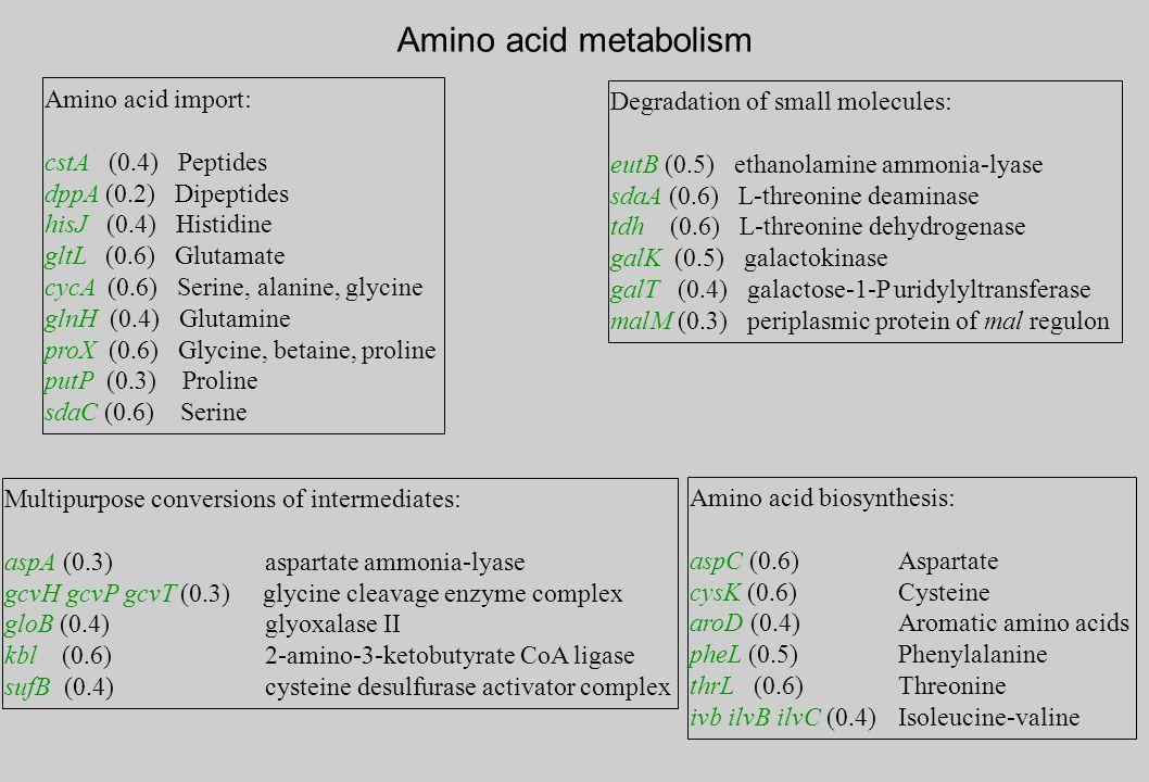 Amino acid biosynthesis: aspC (0.6)Aspartate cysK (0.6)Cysteine aroD (0.4)Aromatic amino acids pheL (0.5)Phenylalanine thrL (0.6)Threonine ivb ilvB ilvC (0.4)Isoleucine-valine Multipurpose conversions of intermediates: aspA (0.3) aspartate ammonia-lyase gcvH gcvP gcvT (0.3) glycine cleavage enzyme complex gloB (0.4) glyoxalase II kbl (0.6) 2-amino-3-ketobutyrate CoA ligase sufB (0.4) cysteine desulfurase activator complex Degradation of small molecules: eutB (0.5) ethanolamine ammonia-lyase sdaA (0.6) L-threonine deaminase tdh (0.6) L-threonine dehydrogenase galK (0.5) galactokinase galT (0.4) galactose-1-P uridylyltransferase malM (0.3) periplasmic protein of mal regulon Amino acid metabolism Amino acid import: cstA (0.4) Peptides dppA (0.2) Dipeptides hisJ (0.4) Histidine gltL (0.6) Glutamate cycA (0.6) Serine, alanine, glycine glnH (0.4) Glutamine proX (0.6) Glycine, betaine, proline putP (0.3) Proline sdaC (0.6) Serine
