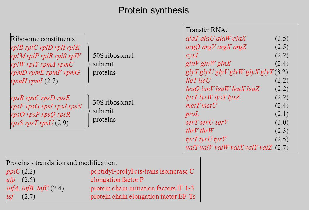 Proteins - translation and modification: ppiC (2.2)peptidyl-prolyl cis-trans isomerase C efp (2.5)elongation factor P infA, infB, infC (2.4)protein ch