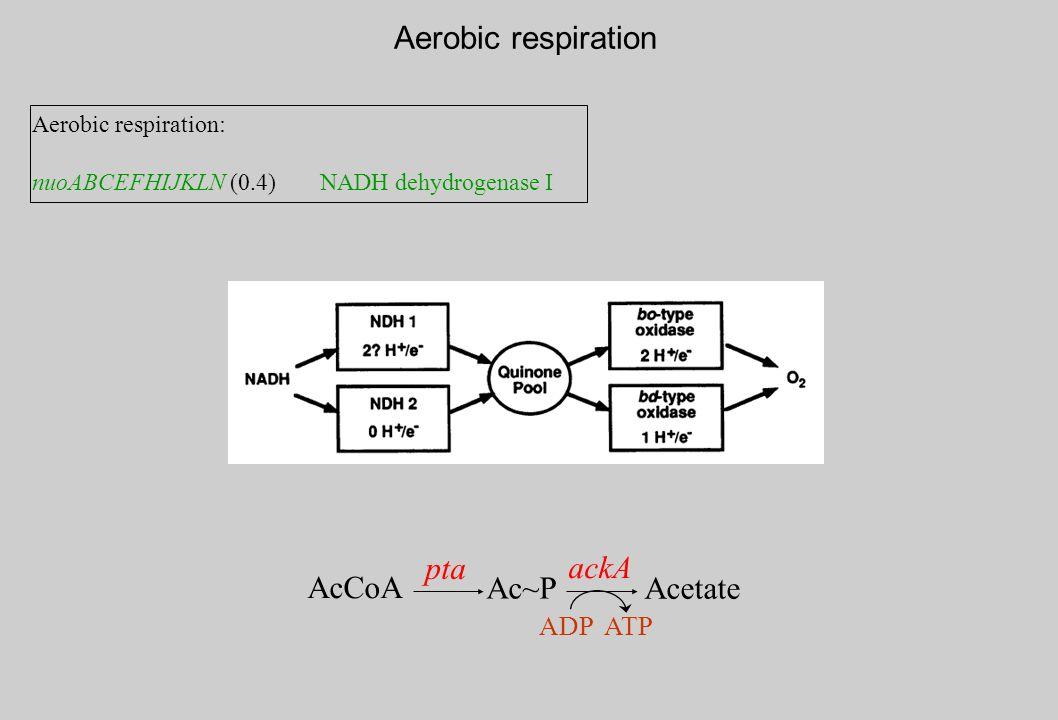 Aerobic respiration Aerobic respiration: nuoABCEFHIJKLN (0.4)NADH dehydrogenase I AcCoA pta Ac~P ackA Acetate ADP ATP