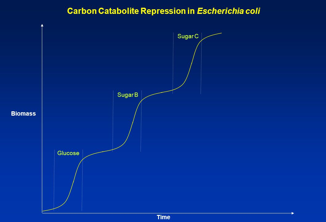 Glucose Sugar B Sugar C Carbon Catabolite Repression in Escherichia coli Biomass Time