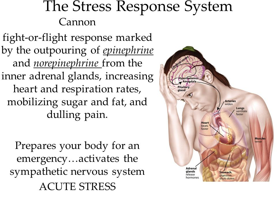 The Stress Response System Cannon fight-or-flight response marked by the outpouring of epinephrine and norepinephrine from the inner adrenal glands, i