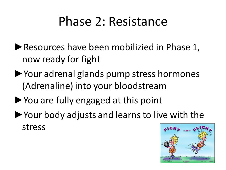 Phase 2: Resistance ► Resources have been mobilizied in Phase 1, now ready for fight ► Your adrenal glands pump stress hormones (Adrenaline) into your
