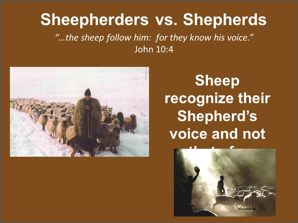 """Sheepherders vs. Shepherds """"…the sheep follow him: for they know his voice."""" John 10:4 Sheep recognize their Shepherd's voice and not that of a strang"""