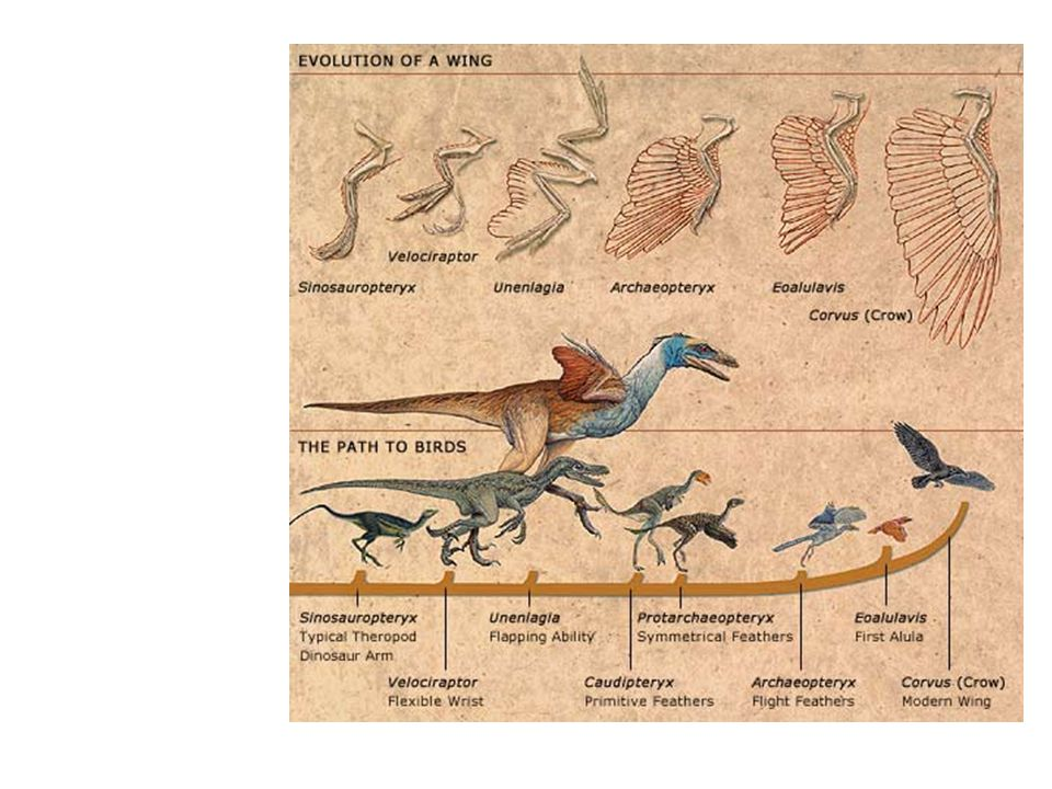 Types of Feathers