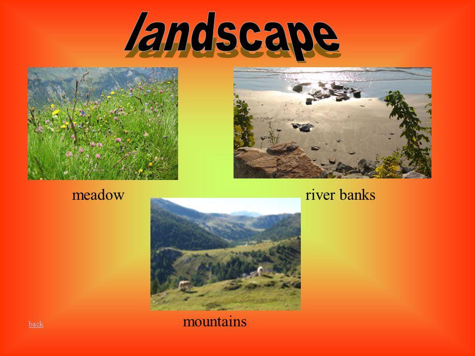 meadowriver banks mountains