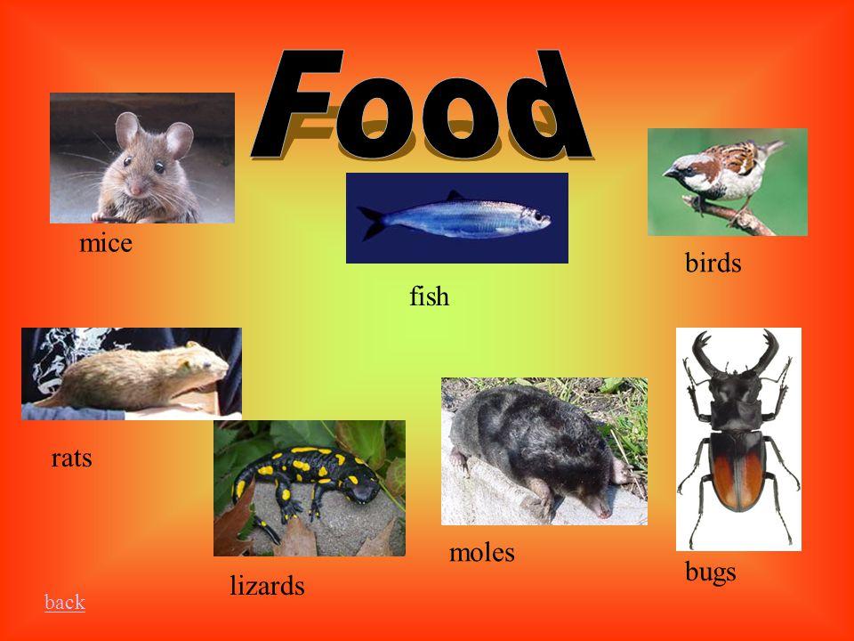 moles fish back mice birds rats lizards bugs