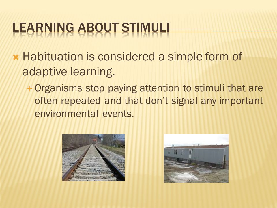  Habituation is considered a simple form of adaptive learning.  Organisms stop paying attention to stimuli that are often repeated and that don't si