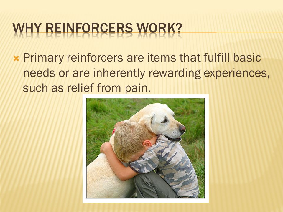  Primary reinforcers are items that fulfill basic needs or are inherently rewarding experiences, such as relief from pain.