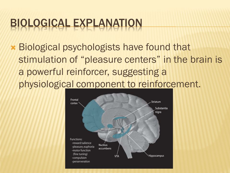 """ Biological psychologists have found that stimulation of """"pleasure centers"""" in the brain is a powerful reinforcer, suggesting a physiological compone"""